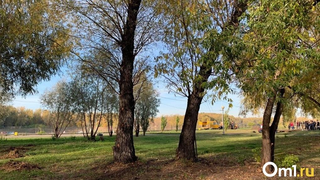 На «Зеленом острове» в Омске снесут более 100 деревьев