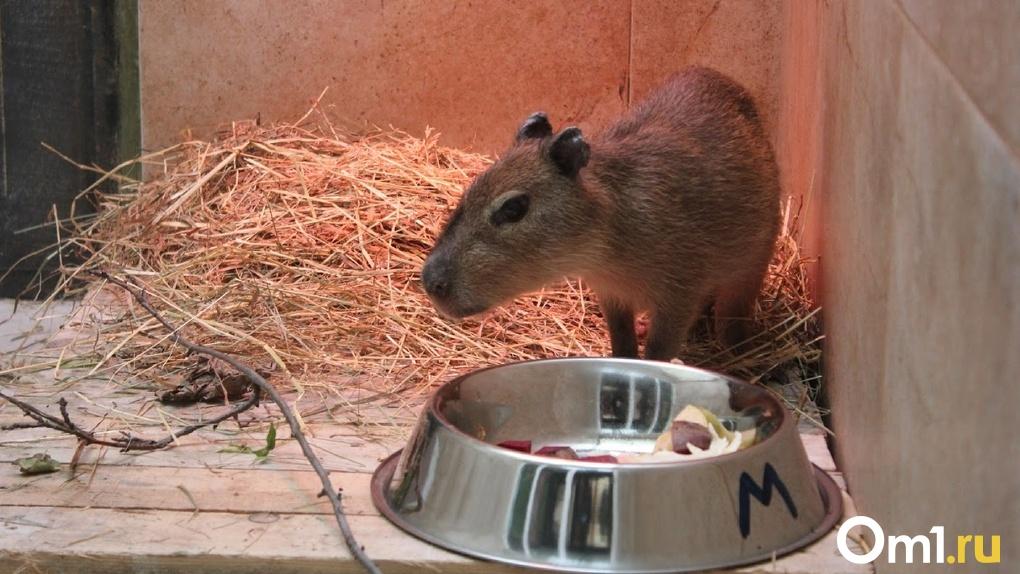 Ограничения возвращаются? Омский зоопарк закрылся из-за коронавируса