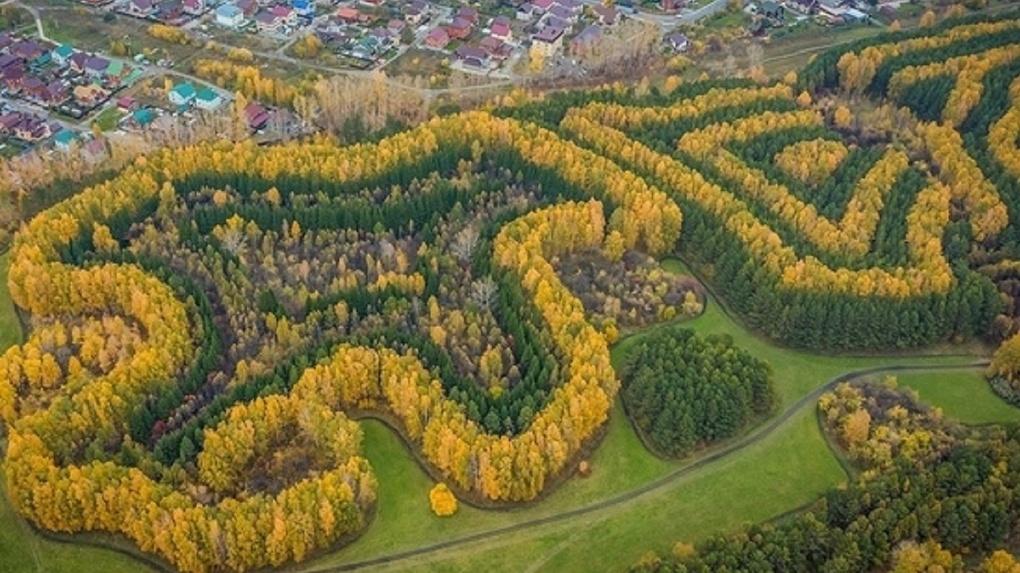 Новосибирский фотограф поразил снимками осеннего леса