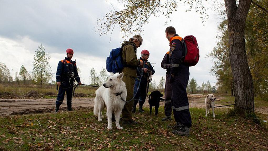 С начала года в новосибирских лесах спасатели отыскали 36 человек