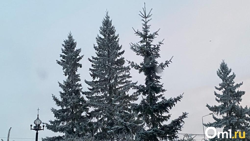 В омском парке «Зелёный остров» передумали вырубать деревья
