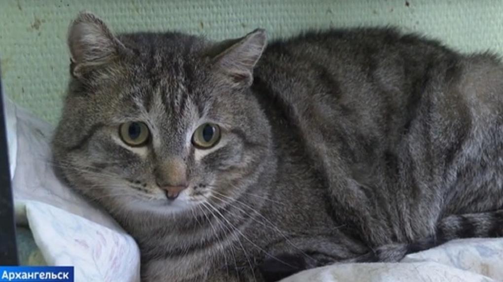 Котенок с тяжелой судьбой не может попасть в Новосибирск из-за коронавируса