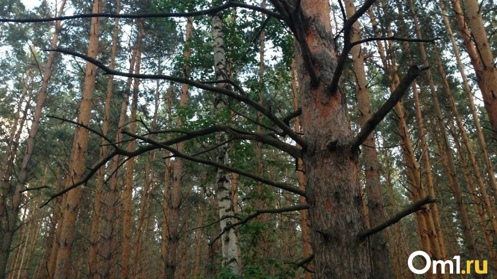 В Омской области второй день ищут пропавшую в лесу женщину
