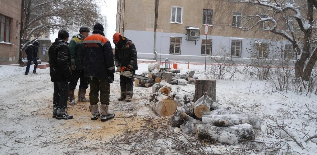 В сквере, выпиленном на глазах у зеленых активистов, высадили новые деревья