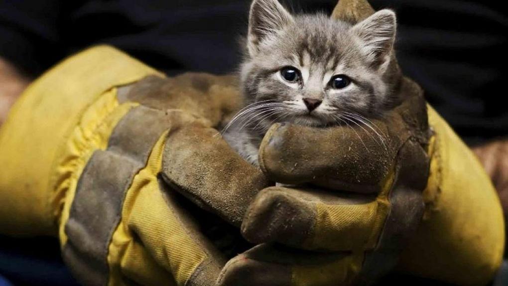 В Новосибирске спасли котёнка, застрявшего в погребе