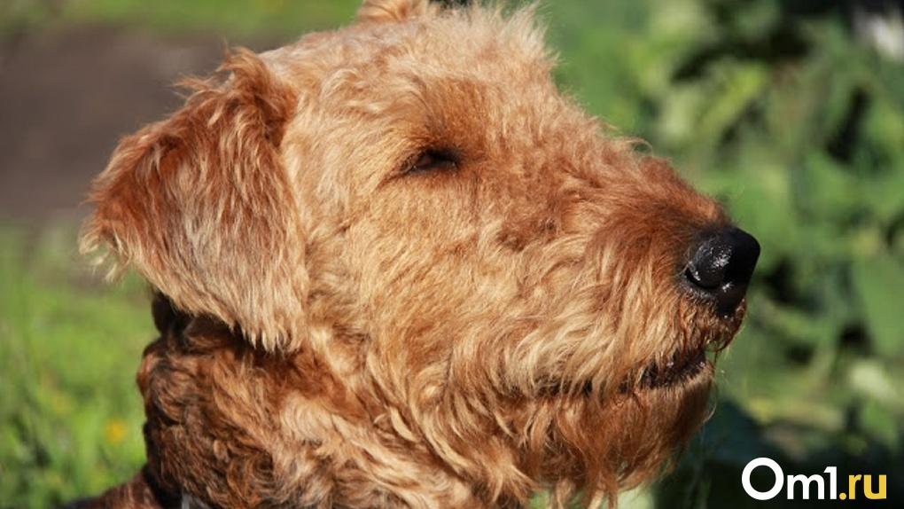 Омичи пожаловались на то, что САХ продаёт собак