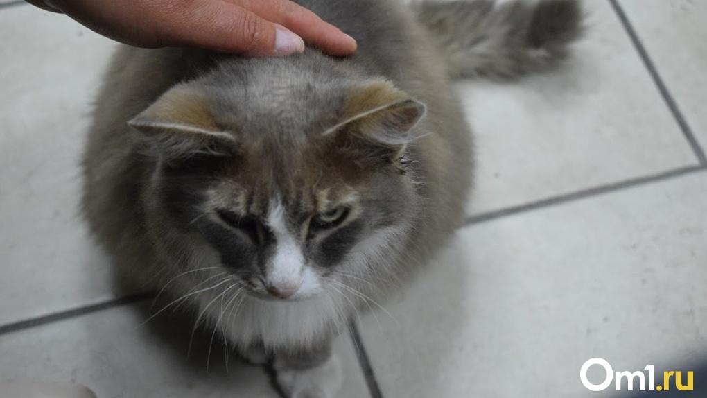 В Омске живодеры расстреливают домашних кошек