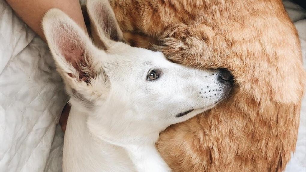 В тренде: собака из новосибирского приюта стала популярным Instagram-блогером