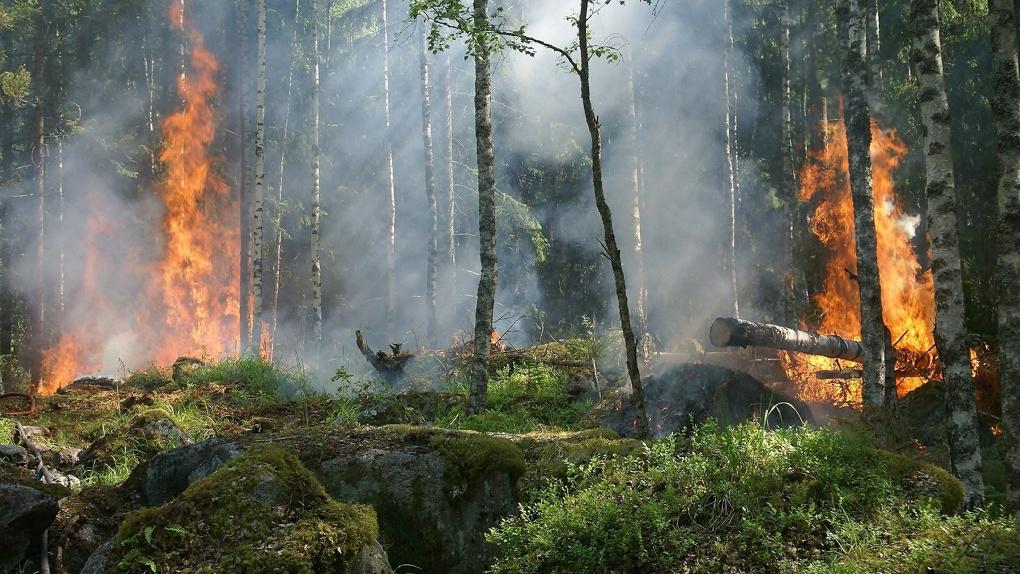 С начала года в Новосибирской области потушили почти 300 лесных пожаров