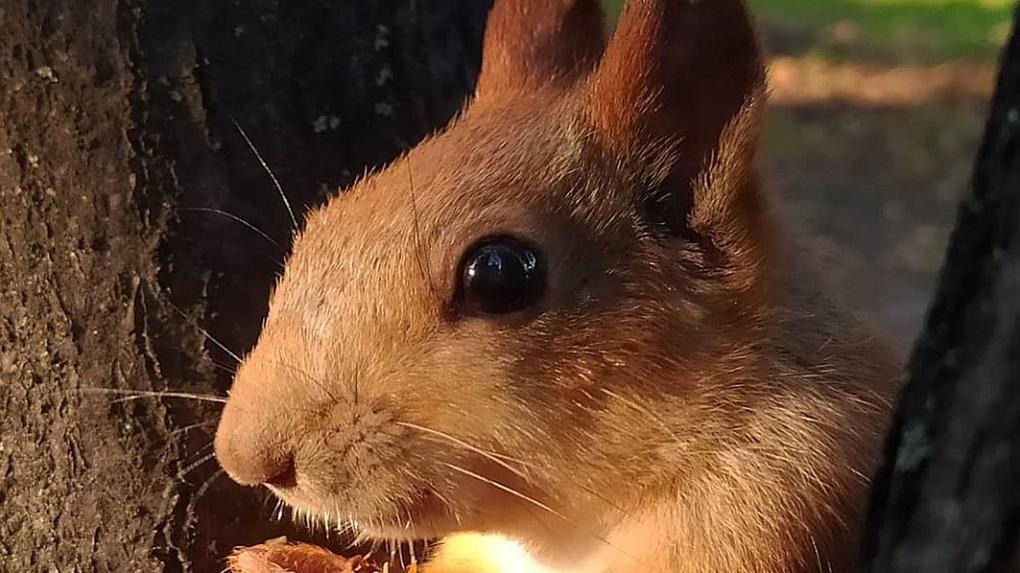 Жительница Новосибирска сняла забавное видео с голодной белкой
