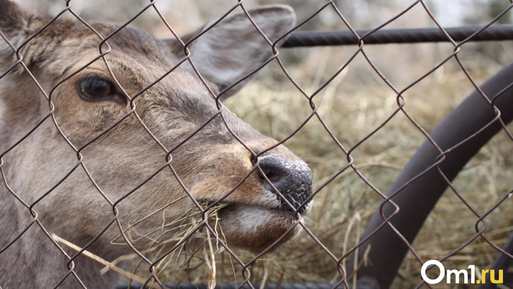 Музеи, зоопарки, розничная торговля. Власти расширили список пострадавших от коронавируса отраслей