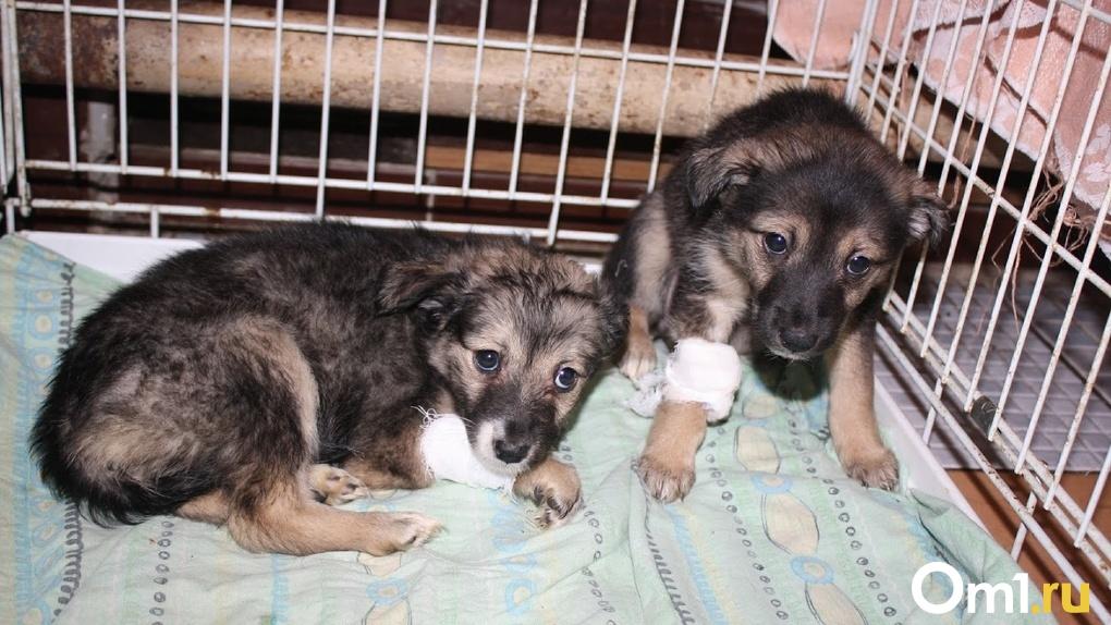 «Маленькие щенки нуждаются в заботе». Омичи продолжают помогать бездомным животным