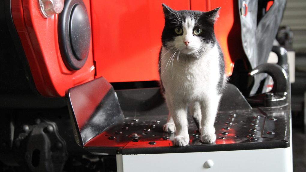 Новосибирского кота-героя спасли от опасного насекомого