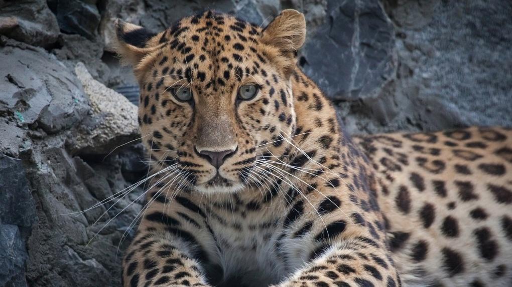 В Новосибирске открываются магазины, зоопарк и музеи после карантина