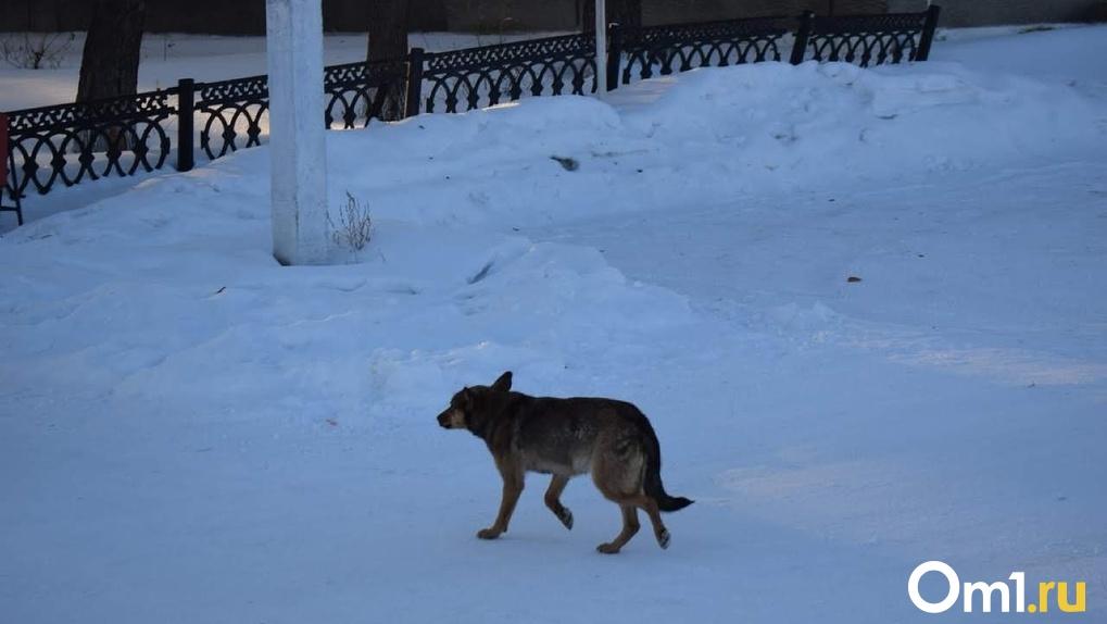 В Омске на двух маленьких омичей напала стая собак