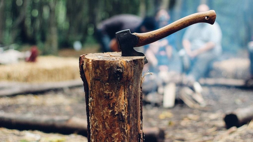 В Новосибирской области «чёрные лесорубы» спилили деревья на 23 млн рублей