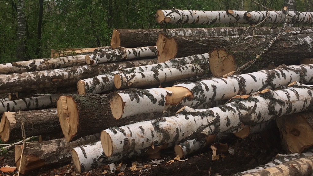 Омич незаконно нарубил деревьев на 320 тысяч рублей