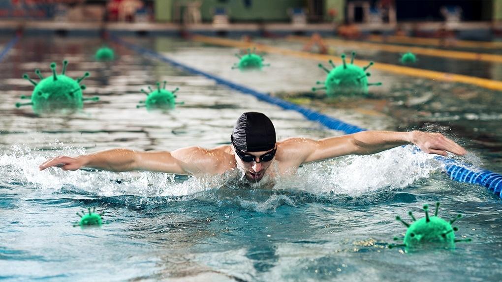 Спорт во время пандемии: на новосибирских пловцов охотятся знаменитые тренеры