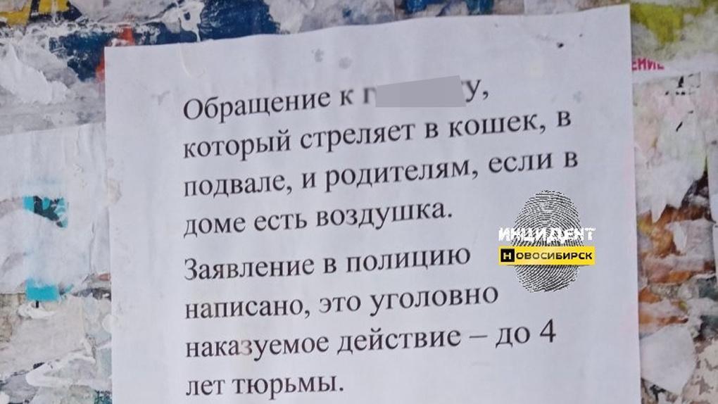 «А воздушку вобью в…» Новосибирец пригрозил расправой живодеру, расстреливающему кошек в подвале дома