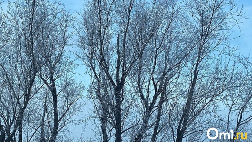 Омск может остаться совсем без деревьев из-за школ и детских садов
