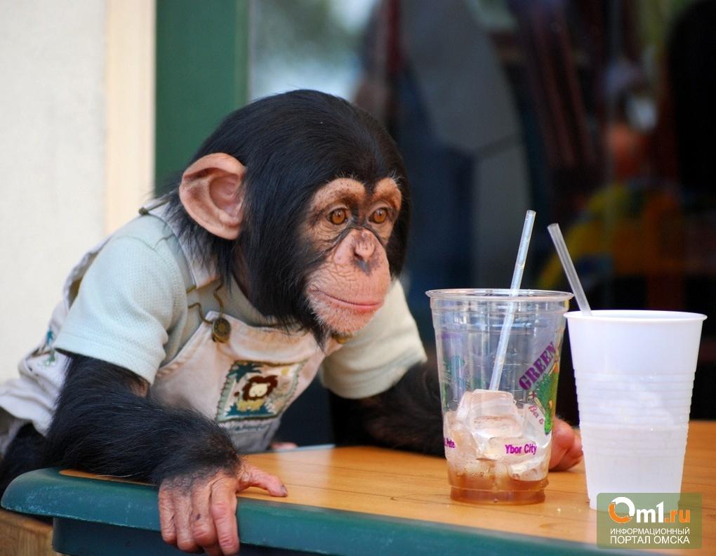 прикольная картинка обезьяна в офисе металла