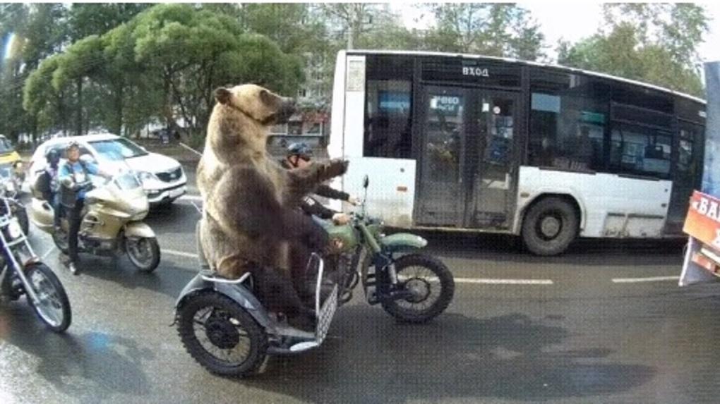 Новосибирцы обсуждают медведей на мотоцикле
