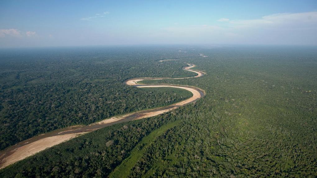 В Сколково предложили мониторить вырубки омских лесов из космоса