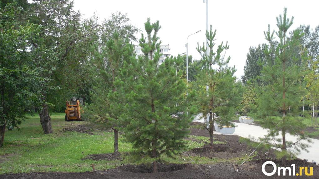 Более двух миллиардов рублей потратят на озеленение Новосибирска