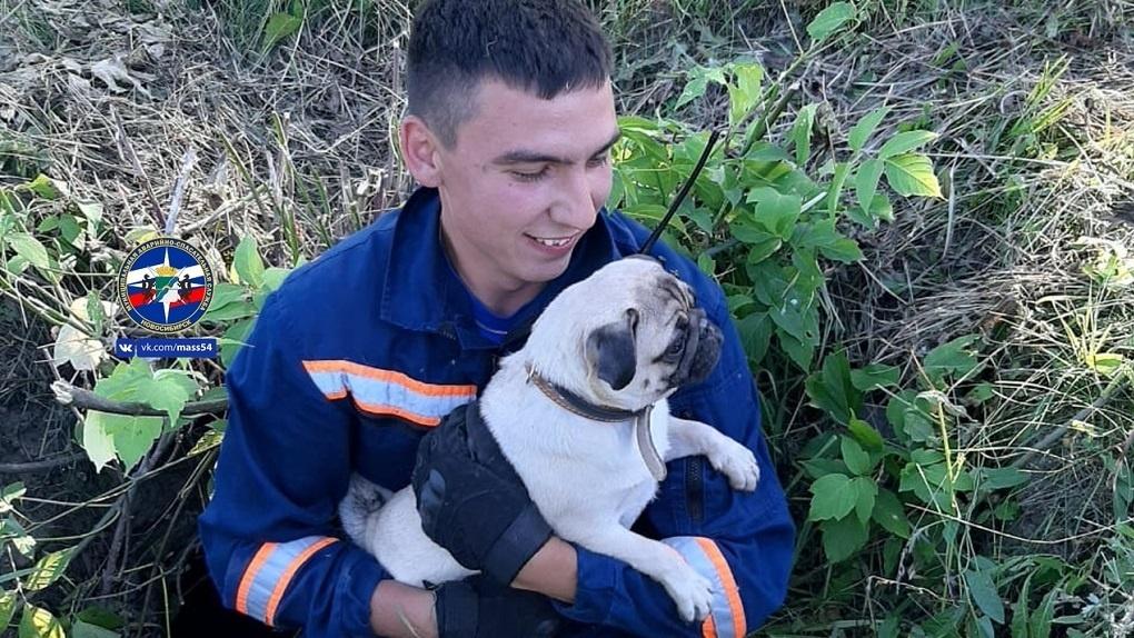 В Новосибирске спасли мопса, который едва не погиб в яме
