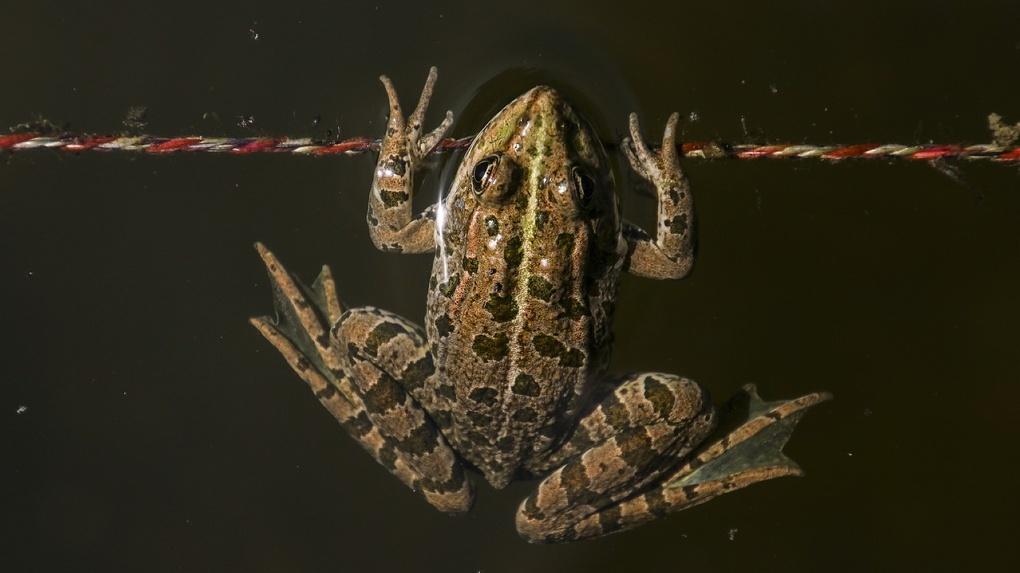Зелёные жабы заселили подвалы и гаражи новосибирцев