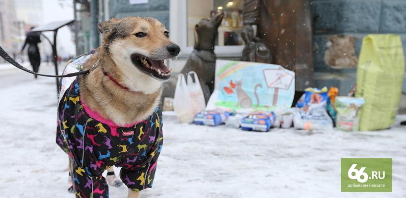 В центре Екатеринбурга 20 человек и одна собака требуют посадить хабаровских живодерок