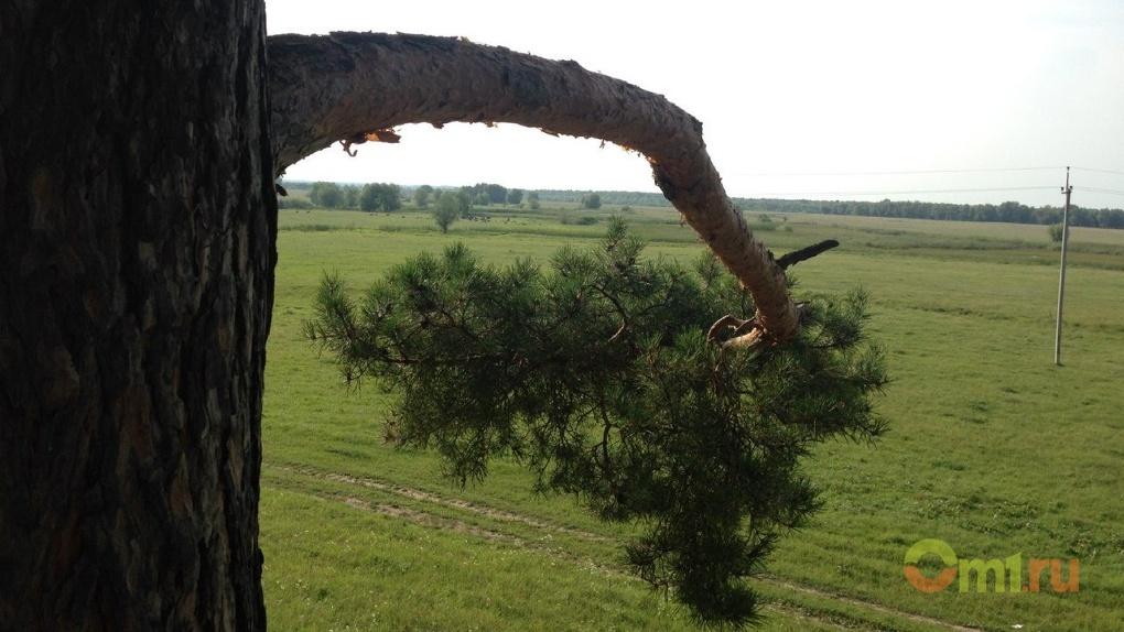 дерево пробитое соломинкой фото подчеркивает фактуру прядей