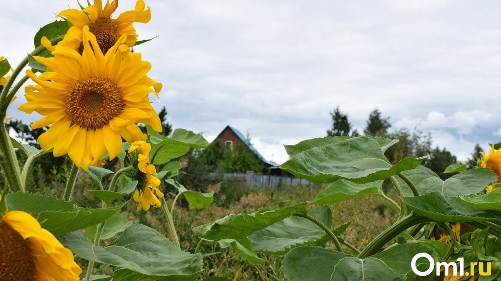 «Разобщиться и самоизолироваться»: в селе под Омском досрочно сняли карантин по коронавирусу