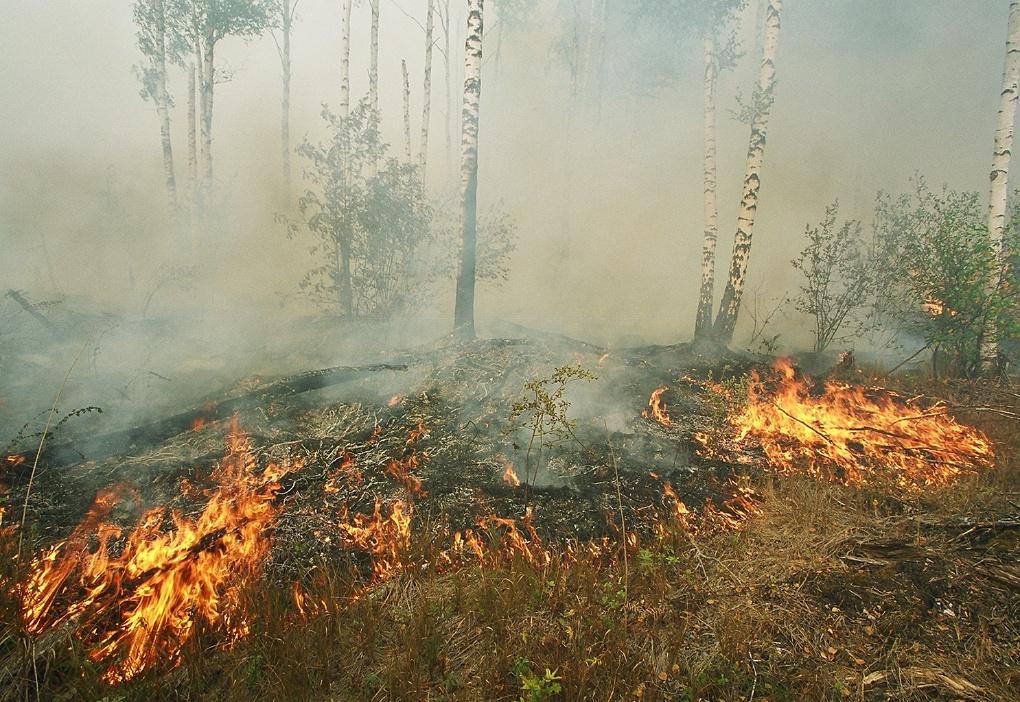 На защиту омских лесов от пожаров потратят 68 млн рублей