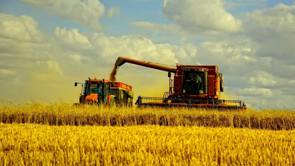 В Омской области цена на зерно после уборки урожая не снизится