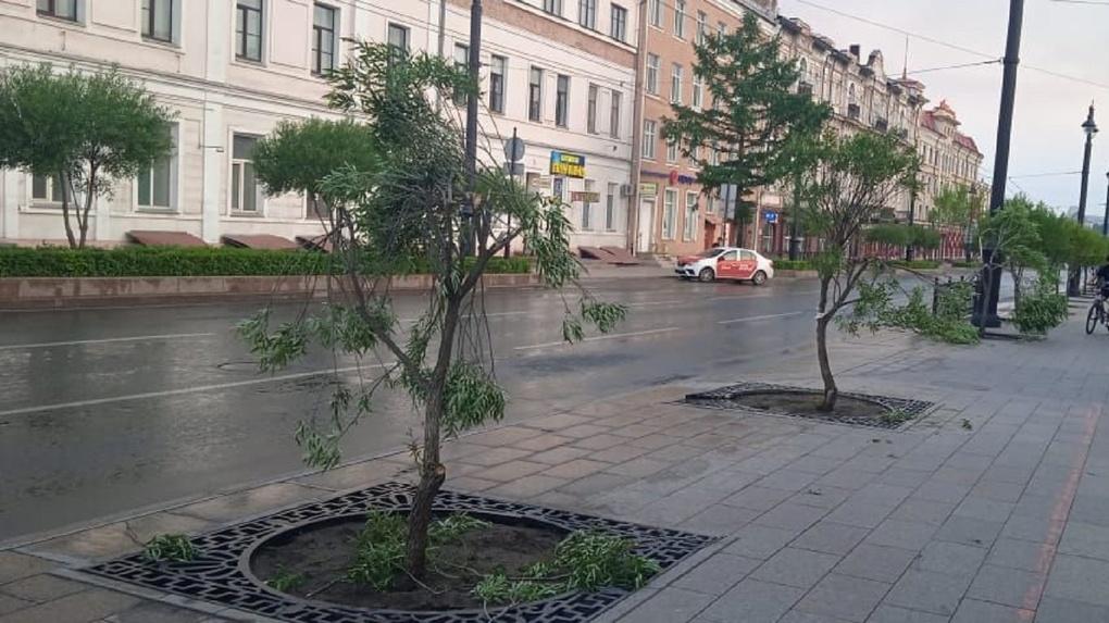 Молодые ивы на улице Ленина сломал неизвестный омский вандал
