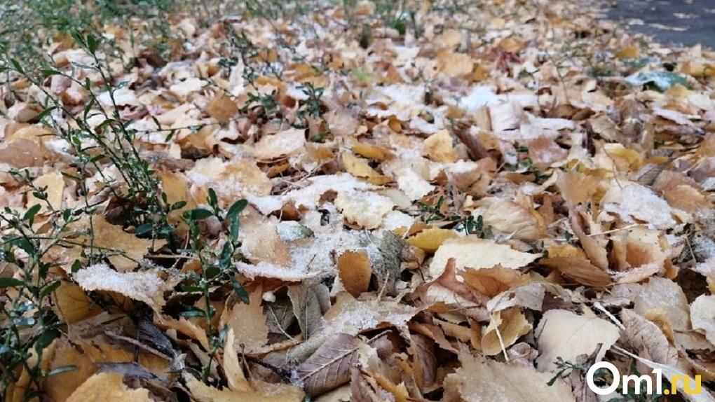 Мощный снегопад прогнозируют новосибирские синоптики