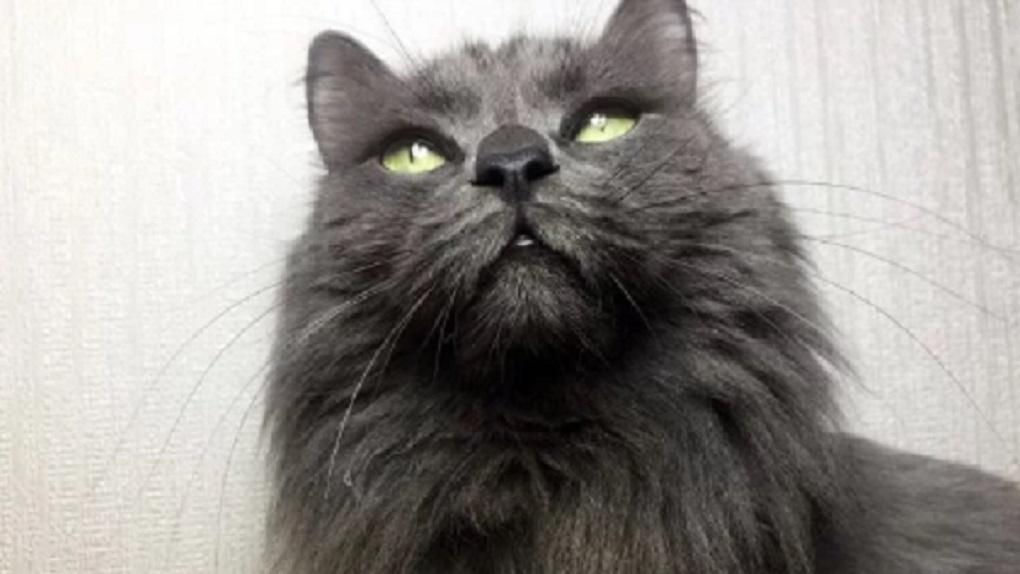 Очередная жительница Новосибирска продает усы кота за 1,9 миллиона рублей