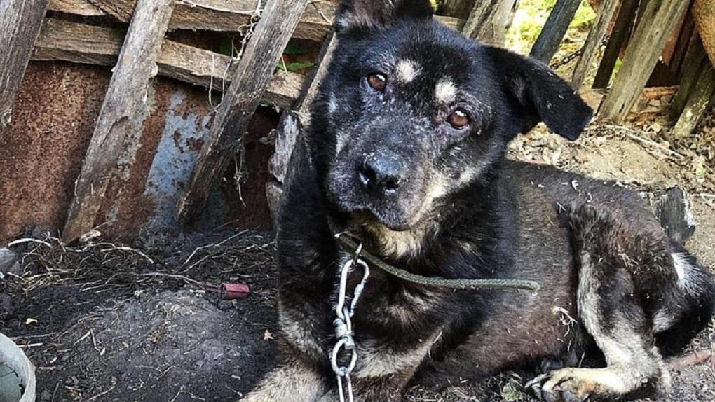 В Омске собаки после смерти хозяйки почти год прожили без еды и воды