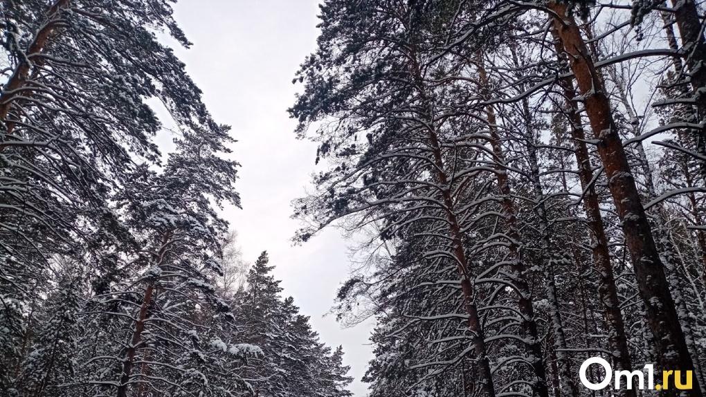 Депутат Госдумы от Новосибирской области предложила вернуть советскую систему охраны лесов от пожаров