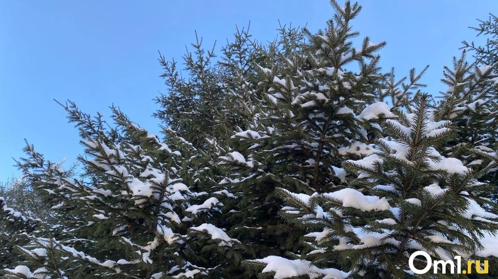 В день зимнего солнцестояния в Новосибирск придут северные морозы