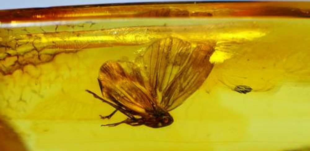 В Омск привезли насекомых, которые жили 50 миллионов лет назад