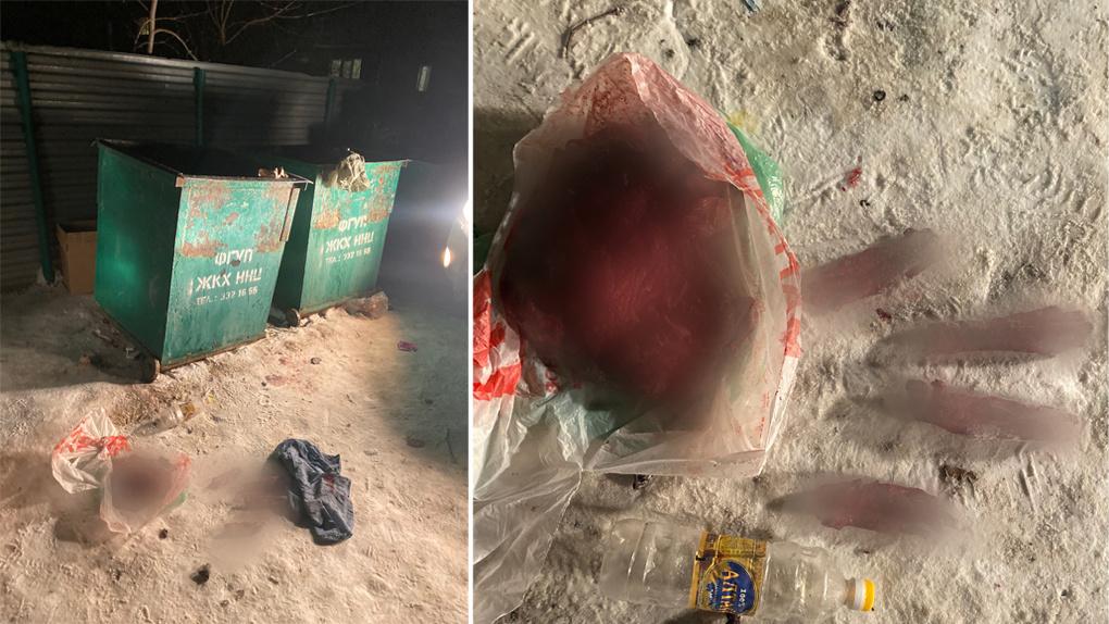 Расчлененный труп собаки найден в мусорном контейнере в новосибирском Академгородке