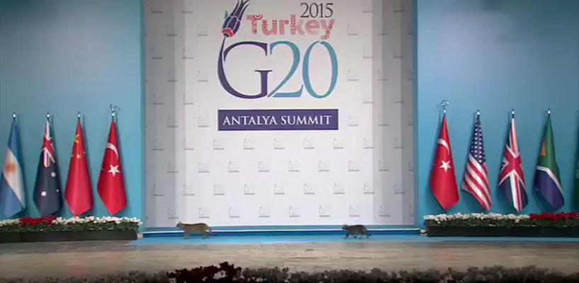 Затмили Путина и Обаму: три кошки засветились на сцене саммита G20