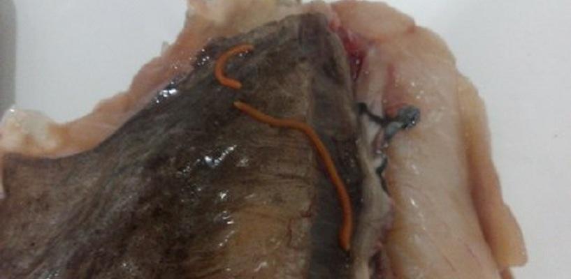 Омич купил в «Ленте» рыбу с червями