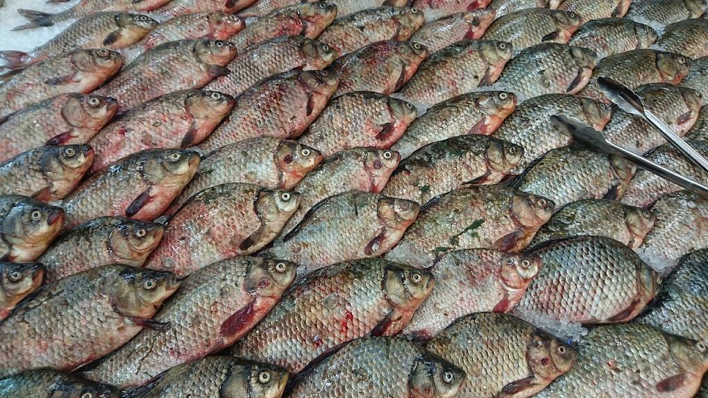 Находчивый омич выложил поздравление для женщин из рыб