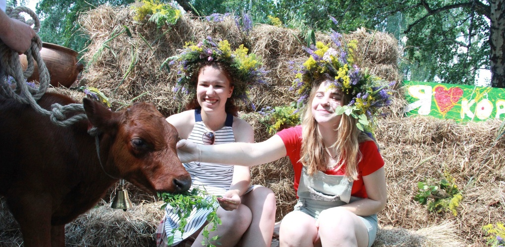 Под Омском поселились счастливые коровы