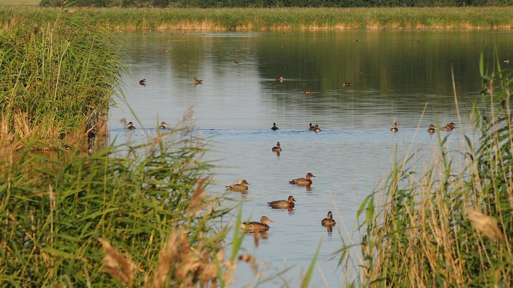 Крупнейшее озеро в Новосибирской области за 20 лет усохло в 2,5 раза