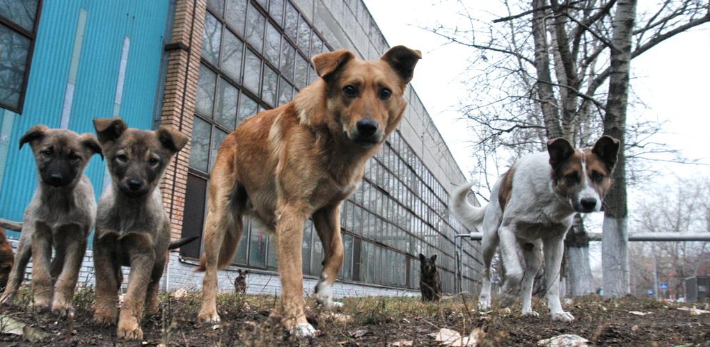 На отлов бродячих собак в Омске добавили 1,6 млн рублей