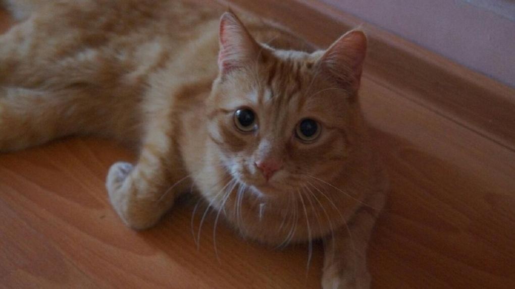 Опасна для общества: новосибирскую живодёрку отправили в психушку за убийство кота Моти